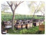 哪里有中蜂养蜂场出售蜂群中蜂种蜂群蜂箱