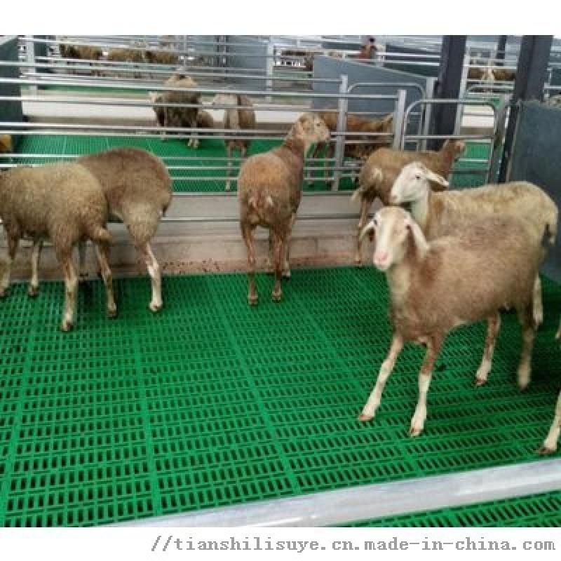 山羊塑料漏粪板 600*600塑料羊床 羊用漏粪网