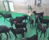 安徽六安羊用漏粪床塑料羊床羊用漏粪网床报价