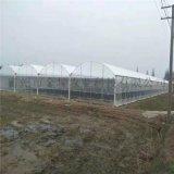連棟薄膜溫室大棚設計 薄膜溫室大棚造價