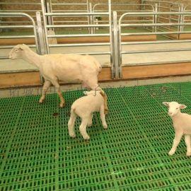 种羊场专用漏粪板塑料羊床板