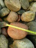 天然黃色鵝卵石價格 河北石家莊永順天然黃色鵝卵石批發