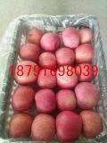 库存洛川纸袋红富士苹果批发陕西库存红富士苹果价格