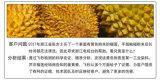 飞秒检测有机导热硅胶配方 浙江杭州检测