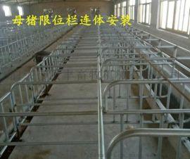 加厚配置母猪定位栏镀锌钢管焊接多少钱一套