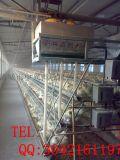 鸡笼子价格 三层阶梯式蛋鸡笼 热镀锌蛋鸡笼