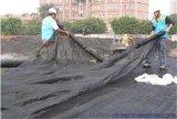 大城县黑色、绿色盖土防尘网管送货