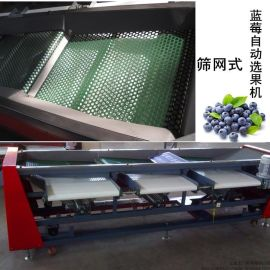 小型自动蓝莓选果机,蓝莓直径分选机