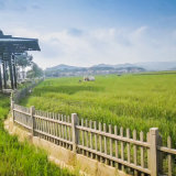 庭院仿木栅栏制作 水泥栅栏 广东仿木栏杆绿色环保