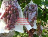 新型葡萄袋-葡萄日光袋-新型葡萄日光袋
