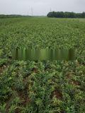 今年钙果苗多少钱一株?钙果苗种植前景