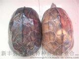 大乌龟 墨龟 外塘生态野生养殖 食用龟味道鲜美