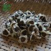 雲南滿澤印度辣木籽介紹,辣木籽有些什麼作用