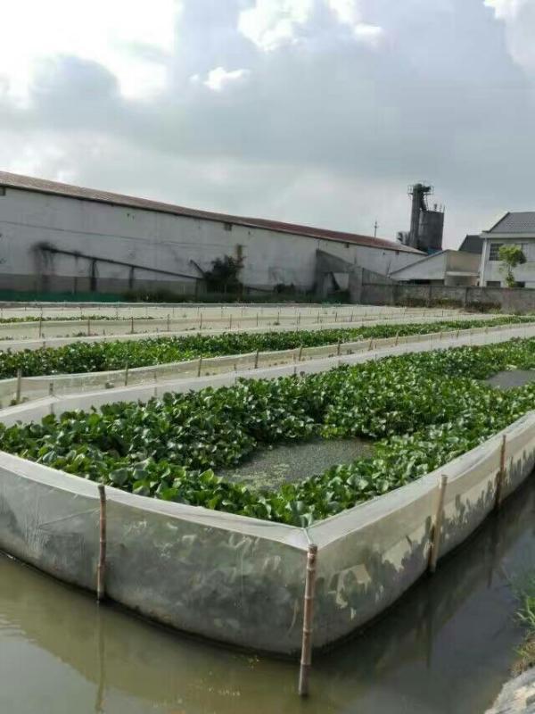 水蛭網箱養殖技術40目60目80目95目水蛭養殖網片螞蟥網箱8平底