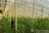 RT JM-150W全光谱植物补光生长灯用于蔬菜、花卉大棚,似太阳光