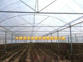 陽光板溫室工程建設,蔬菜連體大棚,請來山東大霖溫室