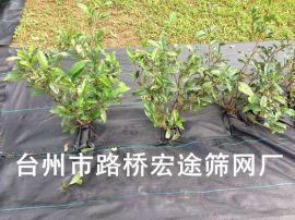 园艺地布_厂家直销80 蓝莓防草布 大棚草莓园艺地布 果园