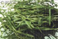 泰龙200目有机小麦苗粉