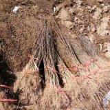 花椒苗几年结果?亩栽多少棵?经济效益如何?