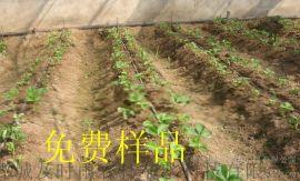 亿碧源供应河南开封滴灌胡萝卜迷宫式滴灌带铺设方法