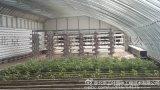 三台县无土栽培供应