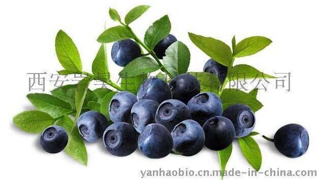 越橘提取物花色素(甙)Bilberry Extract