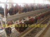 金凤鸡笼|冷镀锌鸡笼|自动化养鸡设备
