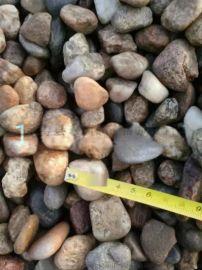 天然鹅卵石滤料 2-4 4-8 8-16 毫米