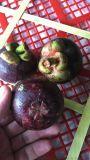 進口水果批發市場