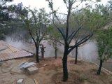 景区小区人造雾景观造雾设备