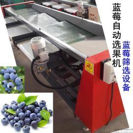 蓝莓鲜果选果机性能高不伤果粉