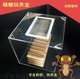 昆虫饲养缸,蟑螂饲养缸,白蚁饲养盒