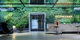 室内绿化景观 荷兰无土植物墙 无土水培垂直绿化