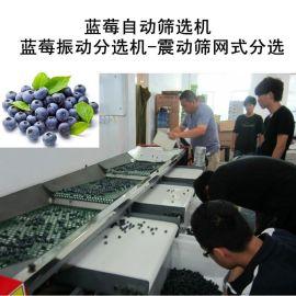 无损伤蓝莓振动筛子机械