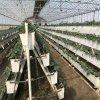 南通 A字架草莓槽  草莓立體種植技術 輕便耐用