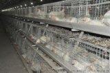 现货鸡笼子石家庄生产阶梯式可拆装四层鸡笼子质量保证