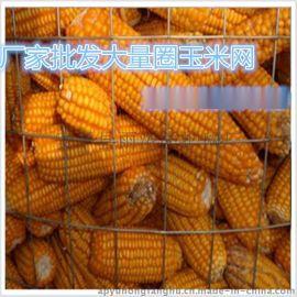 河南圈玉米網批發廠家、鄭州圈玉米網價格、賢惠圈玉米網發車