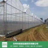 種植薄膜連棟溫室承建-育苗薄膜溫室報價-青州德源
