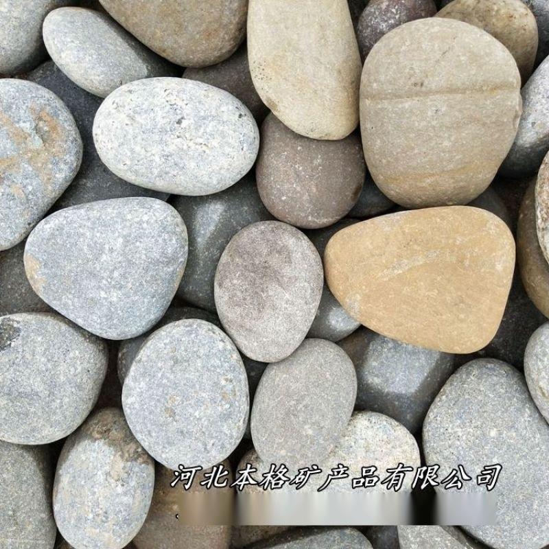 本格供應 承託層鵝卵石 天然彩色鵝卵石變壓器專用