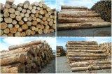 工地支模用辐射松建筑木方