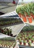 苗床式潮汐灌溉