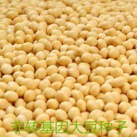 阜星农业非转基因大豆散装五谷杂粮批发自种黄豆河北豆子笨黄豆