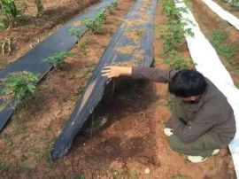 定制黑色果园防草布 园艺地布 编织土工布