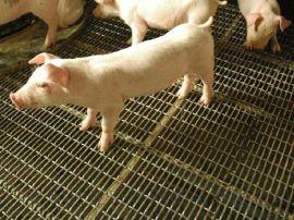 养猪轧花网 养殖场猪床网 山西养殖场轧花网