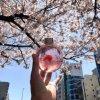 樱花饮料瓶果酒瓶桂花果酒透明圆形玻璃饮料瓶果汁瓶