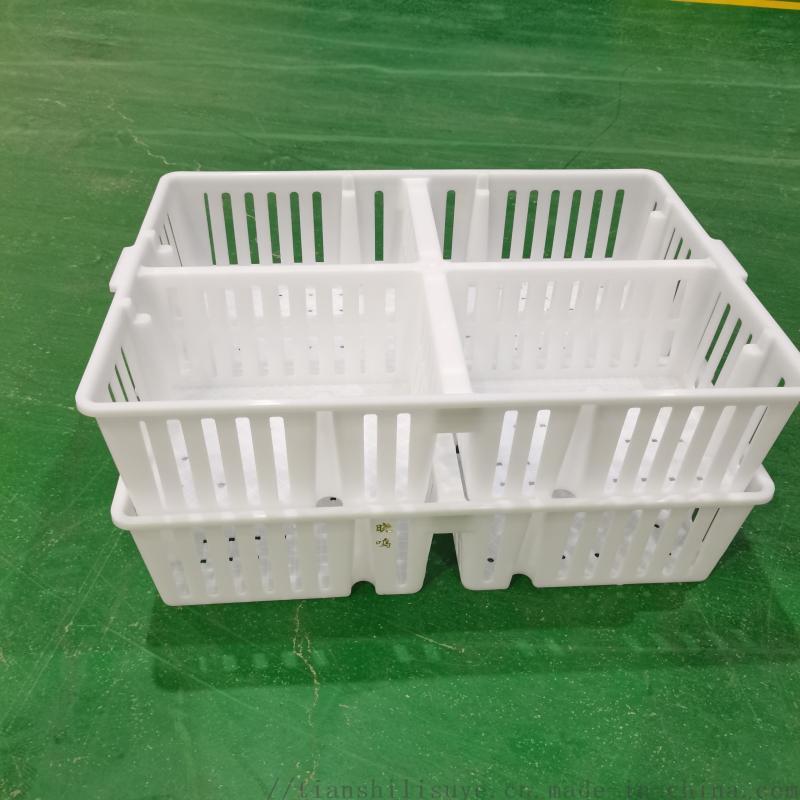 供应吉林带格鸡苗箱鸡苗运输箱鸡苗周转箱