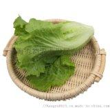 西班牙生菜新鲜花叶花边生菜西餐配菜果蔬绿色蔬菜沙拉