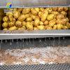 山东威海地蛋去皮机 电动毛刷土豆去皮机