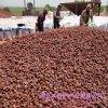 火山石廠家供應 多肉鋪面火山石 園藝火山石顆粒