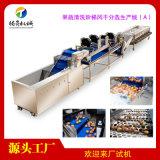 大型果蔬清洗風乾分選生產線(A)